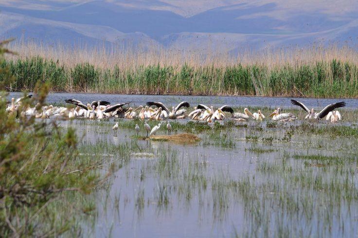 نتيجة بحث الصور عن بحيرة ايبير العذبة افيون تركيا