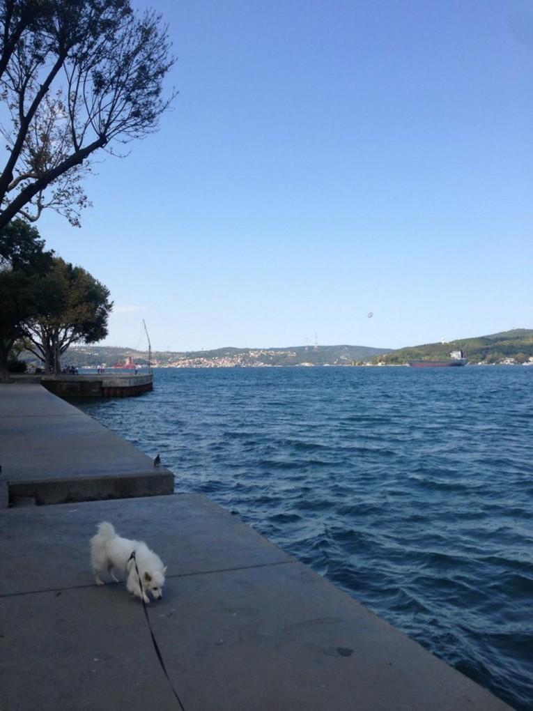افضل 7 أماكن سياحية في منطقة ساراير في إسطنبول التركية Sarıyer