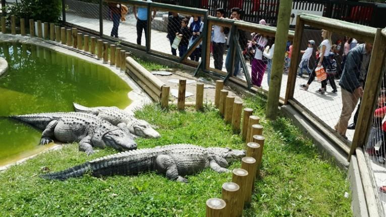 طريقة الذهاب من سوق محمود باشا إلى حديقة حيوانات اسطنبول تركيا
